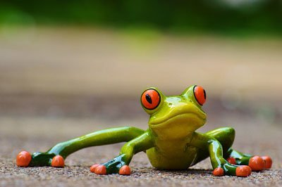 frog low down
